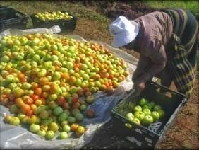 kvinna med äpplen